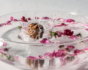 Produktfotografie von einer fallenden Wallnuss in eine Wasserschalle mit Blütenwasser.